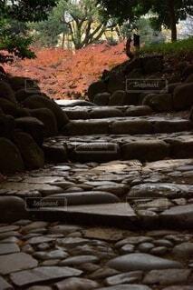 岩壁のクローズアップの写真・画像素材[3717207]
