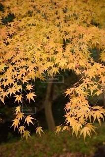 植物のクローズアップの写真・画像素材[3717205]