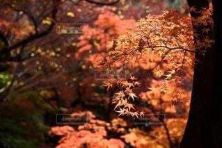 木のクローズアップの写真・画像素材[3717206]