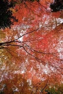 木のクローズアップの写真・画像素材[3717211]