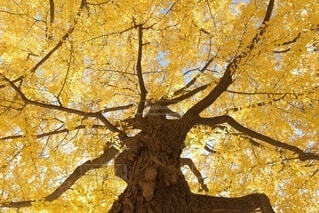 木のクローズアップの写真・画像素材[3717213]