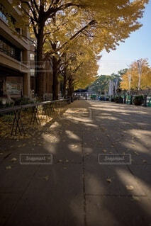 街の通りの眺めの写真・画像素材[3717215]