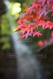 花のクローズアップの写真・画像素材[3800398]