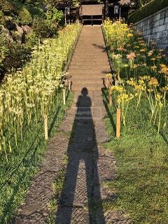 庭の中の小道の写真・画像素材[3907572]