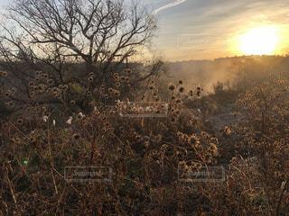 自然,風景,空,屋外,朝日,雲,霧,オレンジ,草,樹木,正月,お正月,日の出,新年,初日の出,草木