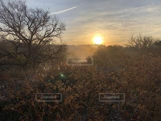自然,風景,空,屋外,太陽,朝日,雲,霧,景色,樹木,正月,朝,お正月,日の出,新年,初日の出,草木