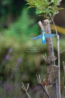 枝に座っている鳥の写真・画像素材[4045226]
