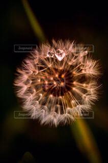 空の花火の写真・画像素材[4253391]