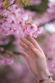 花を持つ手の写真・画像素材[4271774]