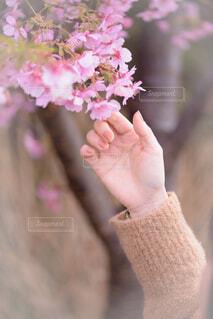 花を持つ手の写真・画像素材[4271780]