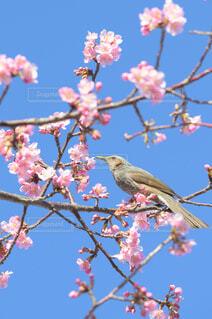 木の上に座っている鳥の写真・画像素材[4274758]