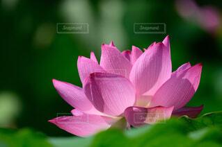 花のクローズアップの写真・画像素材[4315636]