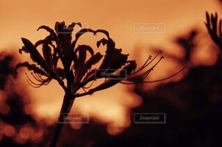木に花の花瓶の写真・画像素材[4315638]