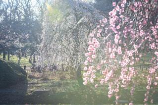 森の中の大きな木の写真・画像素材[4355114]