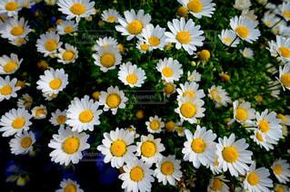 テーブルの上に花の花瓶の写真・画像素材[4386736]