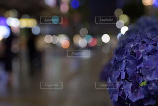 花のクローズアップの写真・画像素材[4464380]