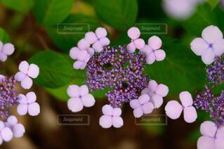 花のクローズアップの写真・画像素材[4556810]