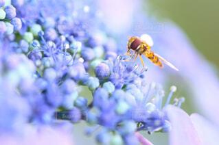 花のクローズアップの写真・画像素材[4556817]