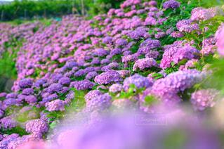 花のクローズアップの写真・画像素材[4556818]