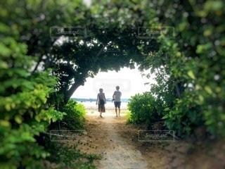 木のトンネルを抜けた夫婦の写真・画像素材[3575096]