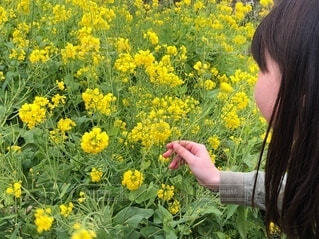 女性,花,屋外,散歩,黄色,菜の花,女の子,手持ち,人物,人,ポートレート,ライフスタイル,草木,お出かけ,手元