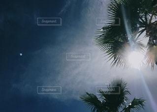 青い空とヤシの木があるクリスマスツリーの写真・画像素材[3272236]