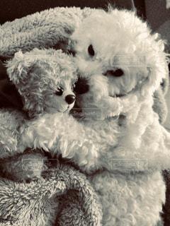 友だち,犬,リビング,モノクロ,昼寝,白黒,フィルム,大好き,なかよし,くまさん,フィルム写真,クマ,ベッド,フィルムフォト