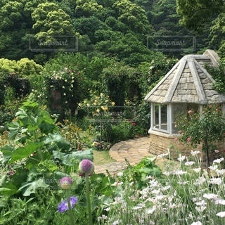 花園のクローズアップの写真・画像素材[3275624]