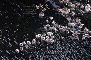 花の写真・画像素材[3273327]