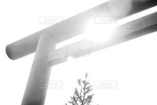 靖国神社の鳥居の写真・画像素材[3274223]