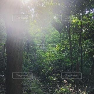 マイナスイオンの写真・画像素材[3274868]