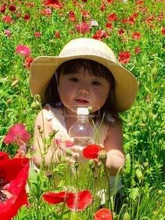 水分補給のあかりちゃんの写真・画像素材[3427173]