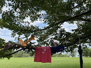 夏の公園でみず遊びの写真・画像素材[3628086]