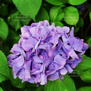 花のクローズアップの写真・画像素材[3395928]