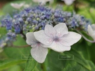 花のクローズアップの写真・画像素材[3419252]