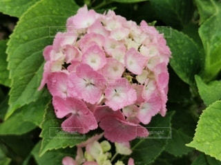 花のクローズアップの写真・画像素材[3419283]