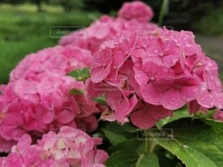 花のクローズアップの写真・画像素材[3419384]