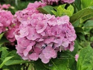 花のクローズアップの写真・画像素材[3419385]