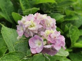 花のクローズアップの写真・画像素材[3419399]