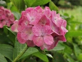 花のクローズアップの写真・画像素材[3419414]