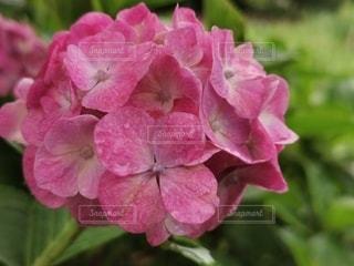 花のクローズアップの写真・画像素材[3419407]