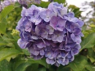 花のクローズアップの写真・画像素材[3419419]