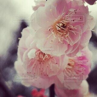 花のクローズアップの写真・画像素材[4245764]