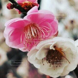 花のクローズアップの写真・画像素材[4245763]