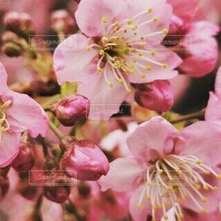 花のクローズアップの写真・画像素材[4248234]
