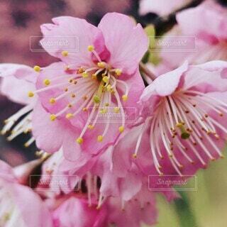 花のクローズアップの写真・画像素材[4248232]