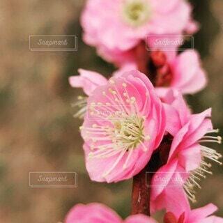 花のクローズアップの写真・画像素材[4248235]