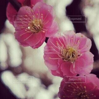 花のクローズアップの写真・画像素材[4248233]