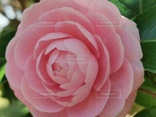 花のクローズアップの写真・画像素材[4255695]