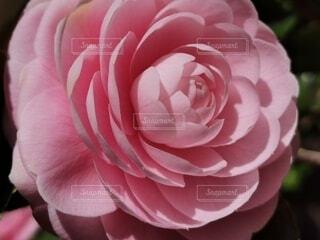 花のクローズアップの写真・画像素材[4255728]
